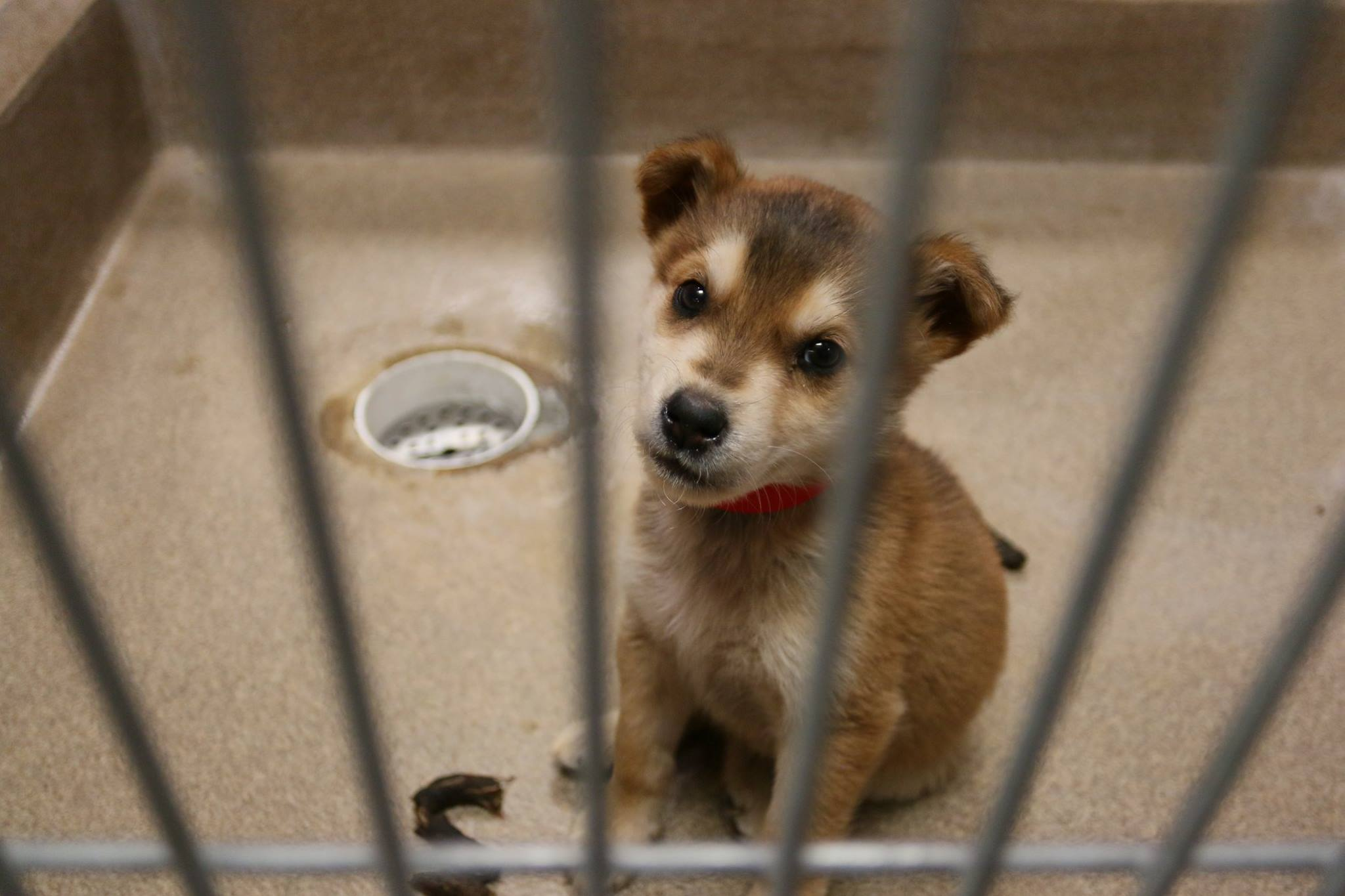 The Edmonton Humane Society Rescued 71 Dogs This Weekend Who Need