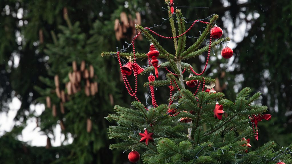 Hanging fir trees 09 December 2019, Baden-Wuerttemberg, Hochdorf: A Christmas tree is decorated with Christmas decorations. In the background there is a fir tree with fir cones. Photo: Tom Weller/dpa (Photo by Tom Weller/picture alliance via Getty Images)