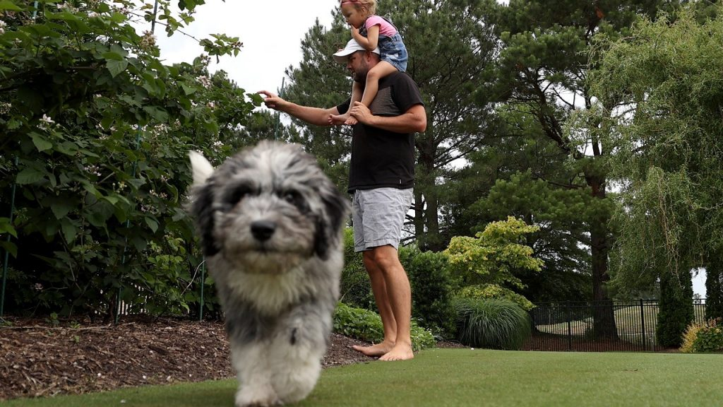 Pro Golfer Marc Leishman Trains During Coronavirus PandemicVIRGINIA BEACH, VIRGINIA - JUNE 02: Professional golfer Marc Leishman of Australia picks strawberries in his backyard with daughter Eva as their dog Doc walks by on June 02, 2020 in Virginia Beach, Virginia. Leishman has resumed training and practicing as the PGA Tour is planning on resuming tournament play next week with a limited schedule since halting play in March due to the Covid-19 pandemic. (Photo by Rob Carr/Getty Images)